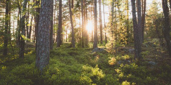 Beredskapslyftet: skog