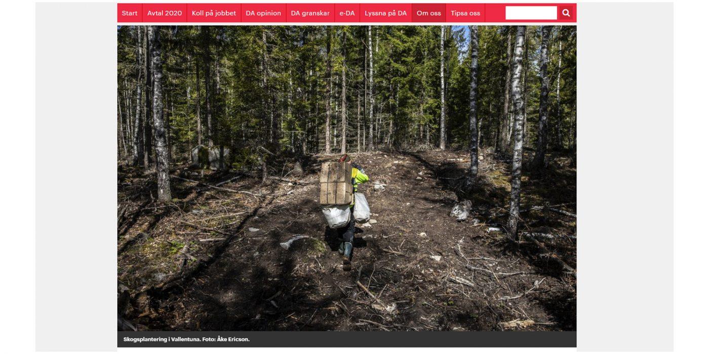 Skogsplantörer i skogen