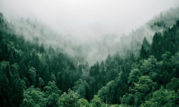 skog envigas