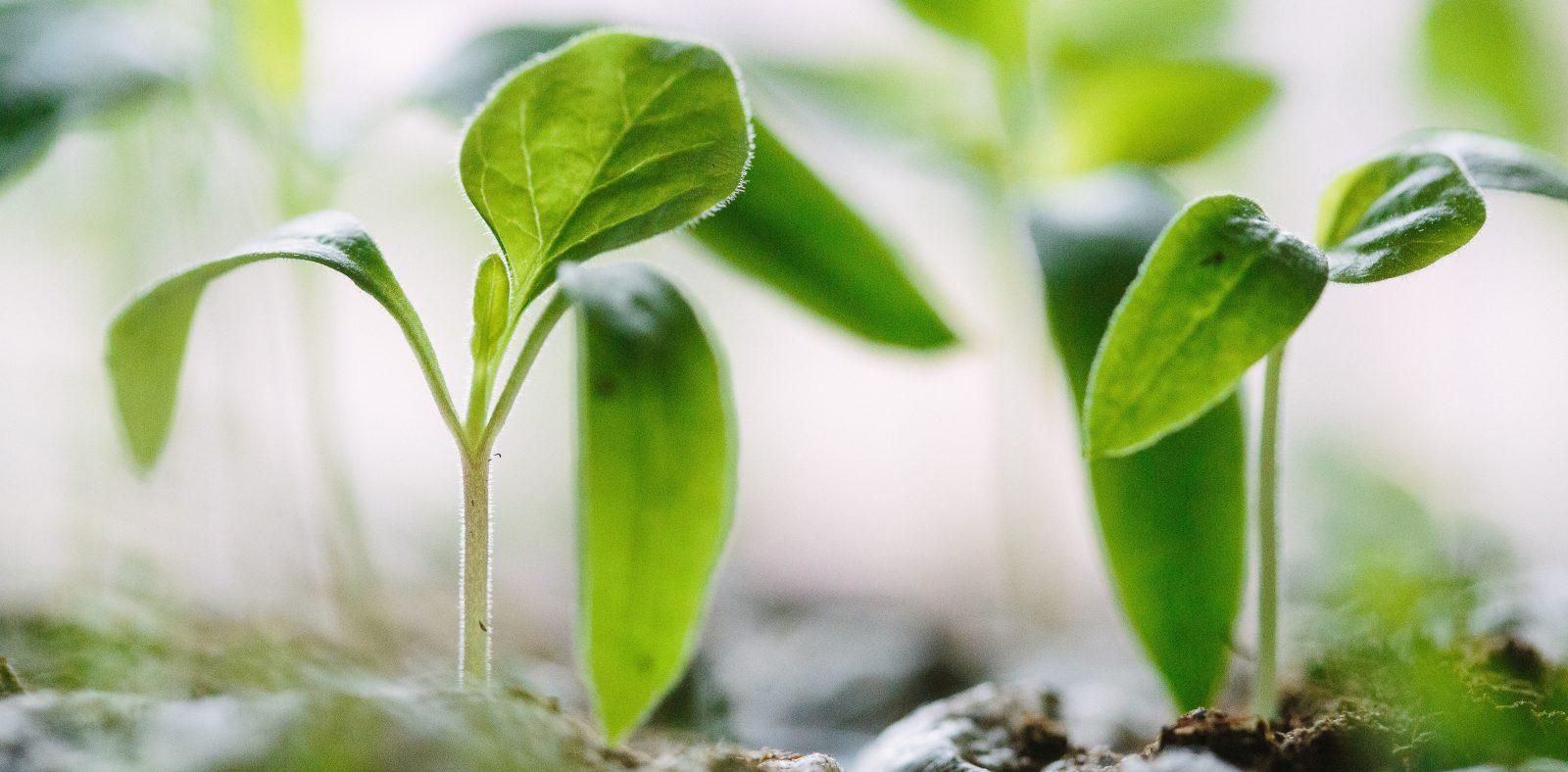 Hållbarhetsprogram